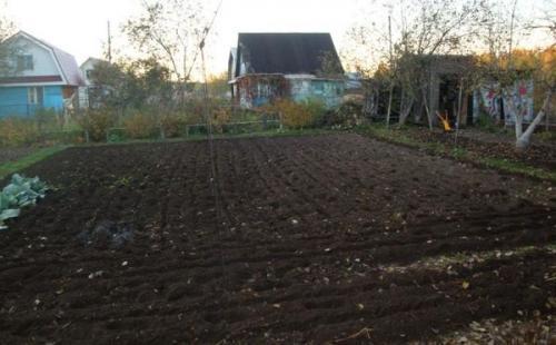 Что посадить после садовой земляники. Когда нужно сажать, что-то после клубники