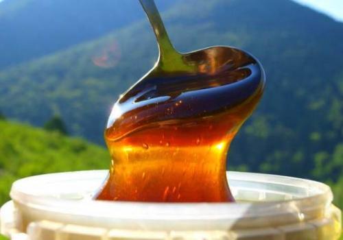 Мед дягилевый чем полезен. Лечебные свойства