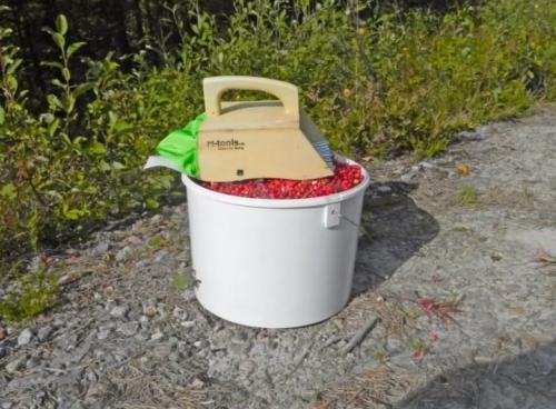 Сбор ягод. Когда и как собирать ягоду