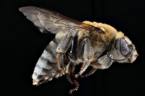 К чему снится, что покусали пчелы. К чему снится укус пчелы девушке, женщине, беременной, мужчине – толкование по разным сонникам