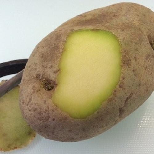 Можно ли кушать зеленую картошку. Можно ли употреблять в пищу позеленевшую картошку