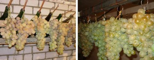 Как виноград сохранить на зиму. Способы хранения винограда на зиму