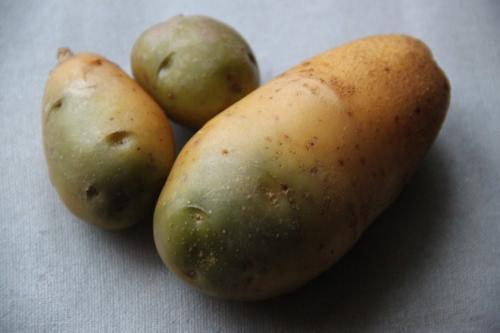 У картошки зеленая кожура. Почему нельзя есть зелёный картофель