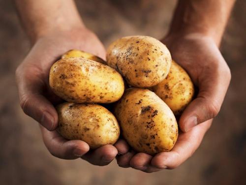 Зеленая картошка от папиллом. Зеленая картошка против папиллом на лице