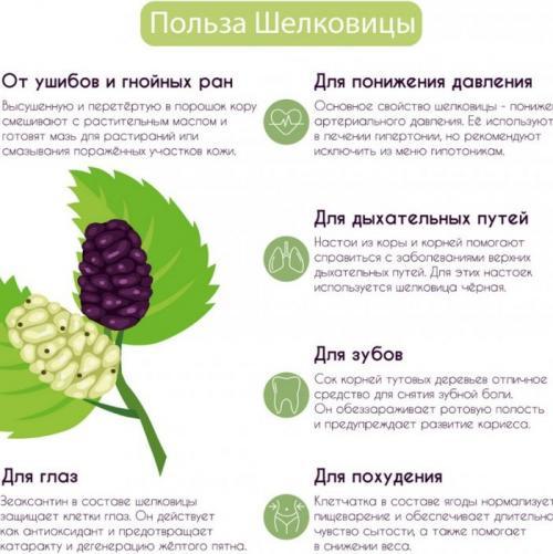 Сироп тутовник лечебные свойства. Лечебные свойства
