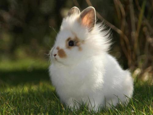 Сколько живут кролики. Продолжительность жизни кроликов