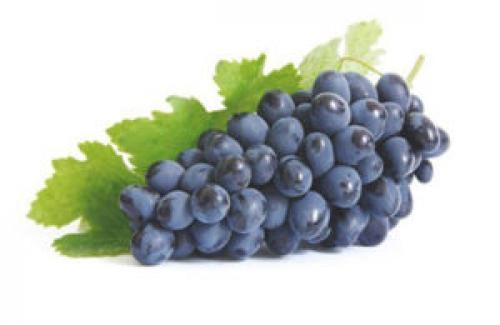 Что можно сделать из неспелого винограда в домашних условиях. Виноград Изабелла