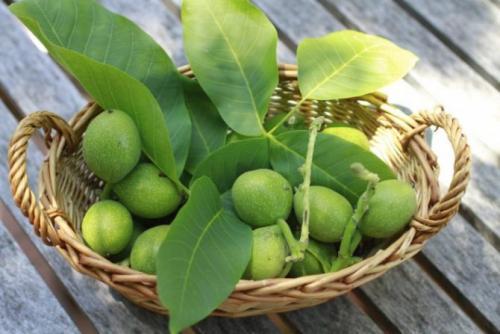 Можно ли есть зеленые грецкие орехи. Польза зеленого грецкого ореха
