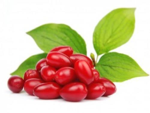Кизил его полезные свойства. Как использовать пользу кизила и где можно применить свойства этой ягоды?