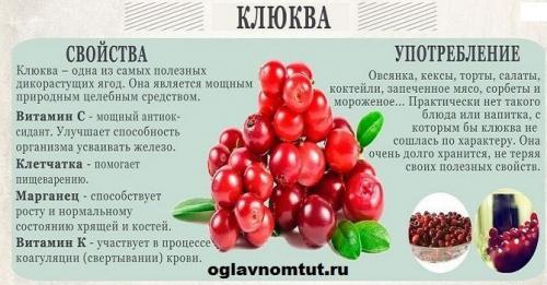 Ягода клюква полезные свойства. В пользе и вреде клюквы – ягоды «сидят» некоторые причины к ежедневному ее употреблению