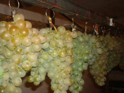 Хранение винограда в домашних условиях на зиму. Как сохранить виноград зимой. Как сохранить виноград в домашних условиях