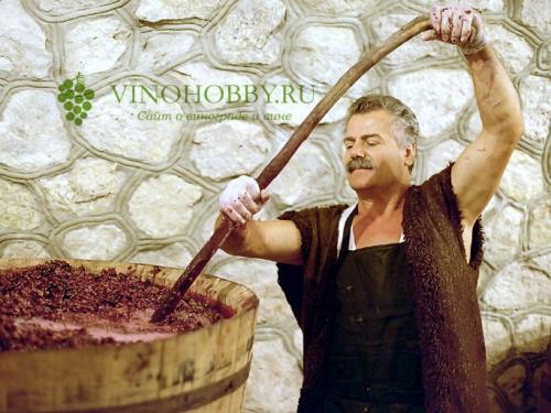 Как из винограда сделать закваску для вина. Закваска для вина