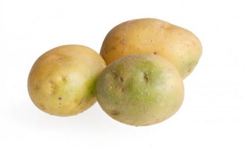 Почему нельзя есть зеленый картофель. Первая помощь