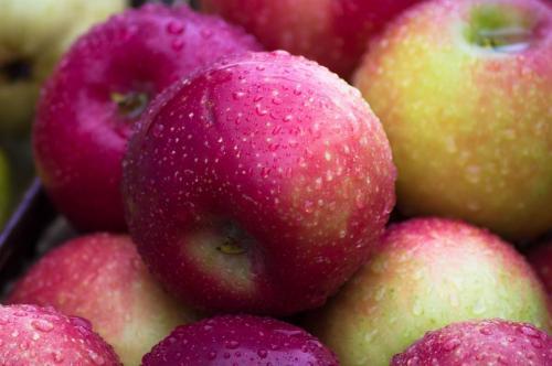 Русские сорта яблок. 50 сортов яблок с фото и описаниями
