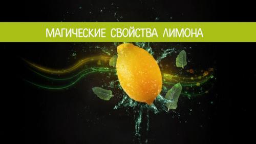 Лимонное дерево дома приметы. Магические свойства лимона