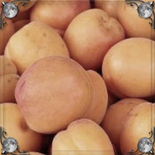 Крупные абрикосы во сне. Сонник большие абрикосы, к чему снятся