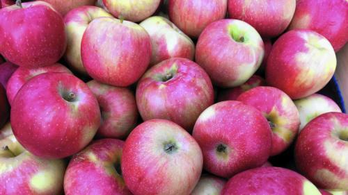 Яблони зимние сорта. Всё про зимние сорта яблок